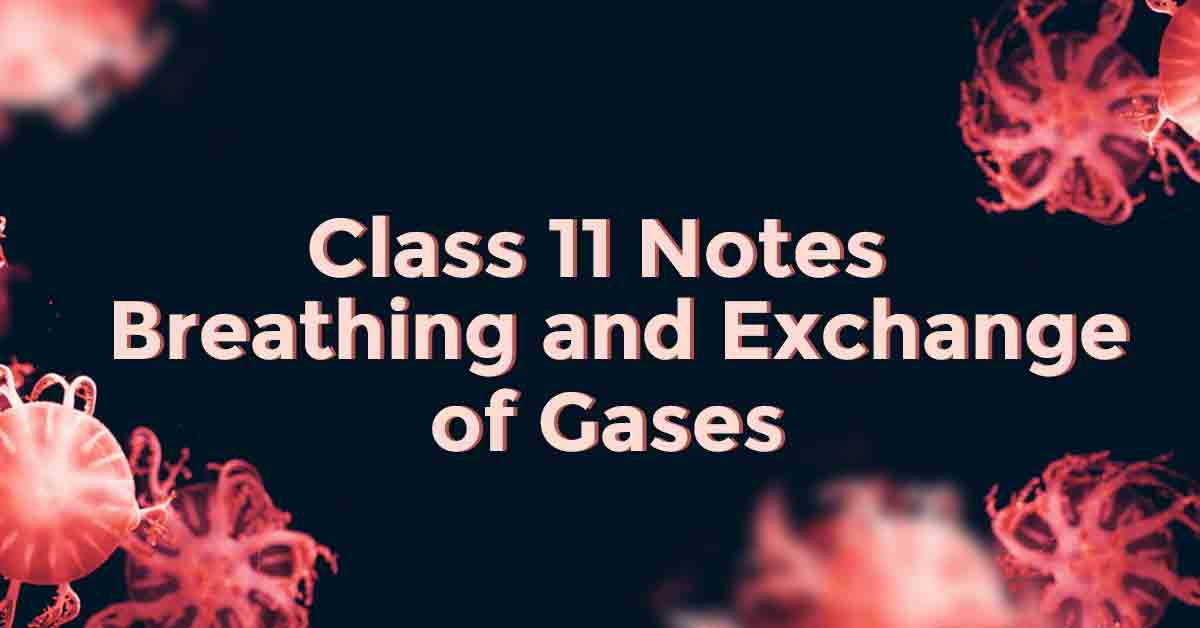 Breathing and Exchange of Gases Class 11 Notes