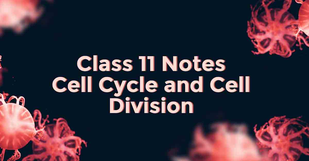 Cell Cycle and Cell Division Class 11 Notes