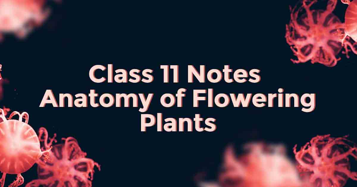 Anatomy of Flowering Plants Class 11 Notes