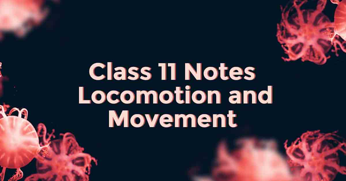 Locomotion and Movement Class 11 Notes