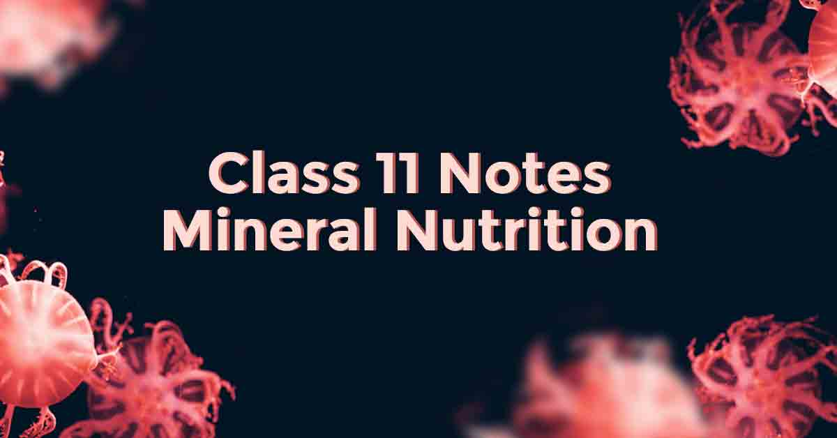 Introduction to Mineral Nutrition Class 11 Notes