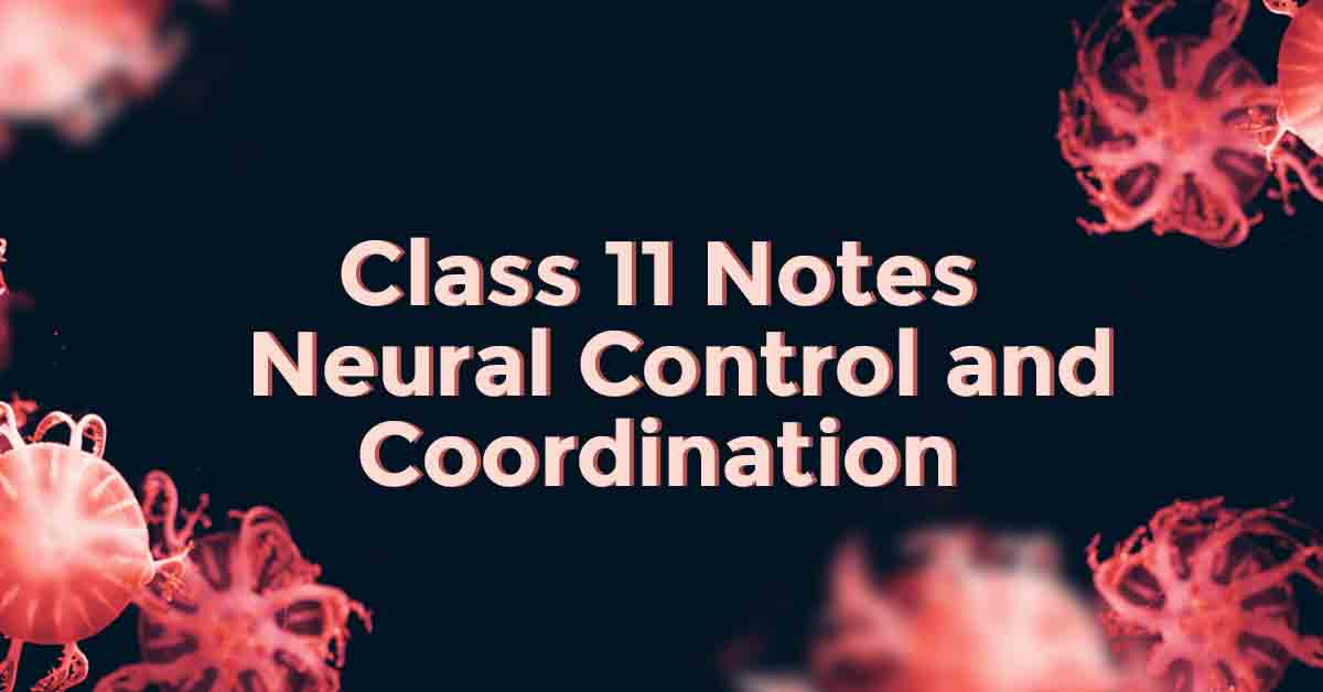 Neural Control and Coordination Class 11 Notes