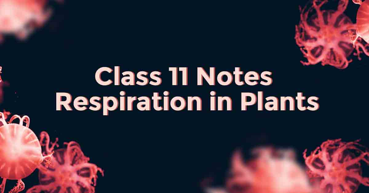 Respiration in Plants Class 11 Notes