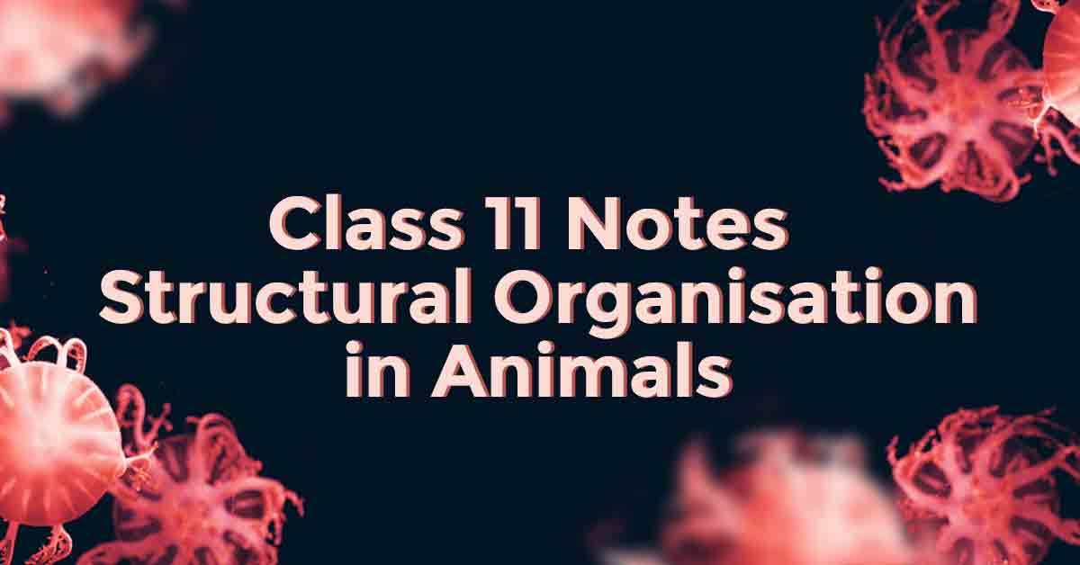 Structural Organization in Animals Class 11 Notes