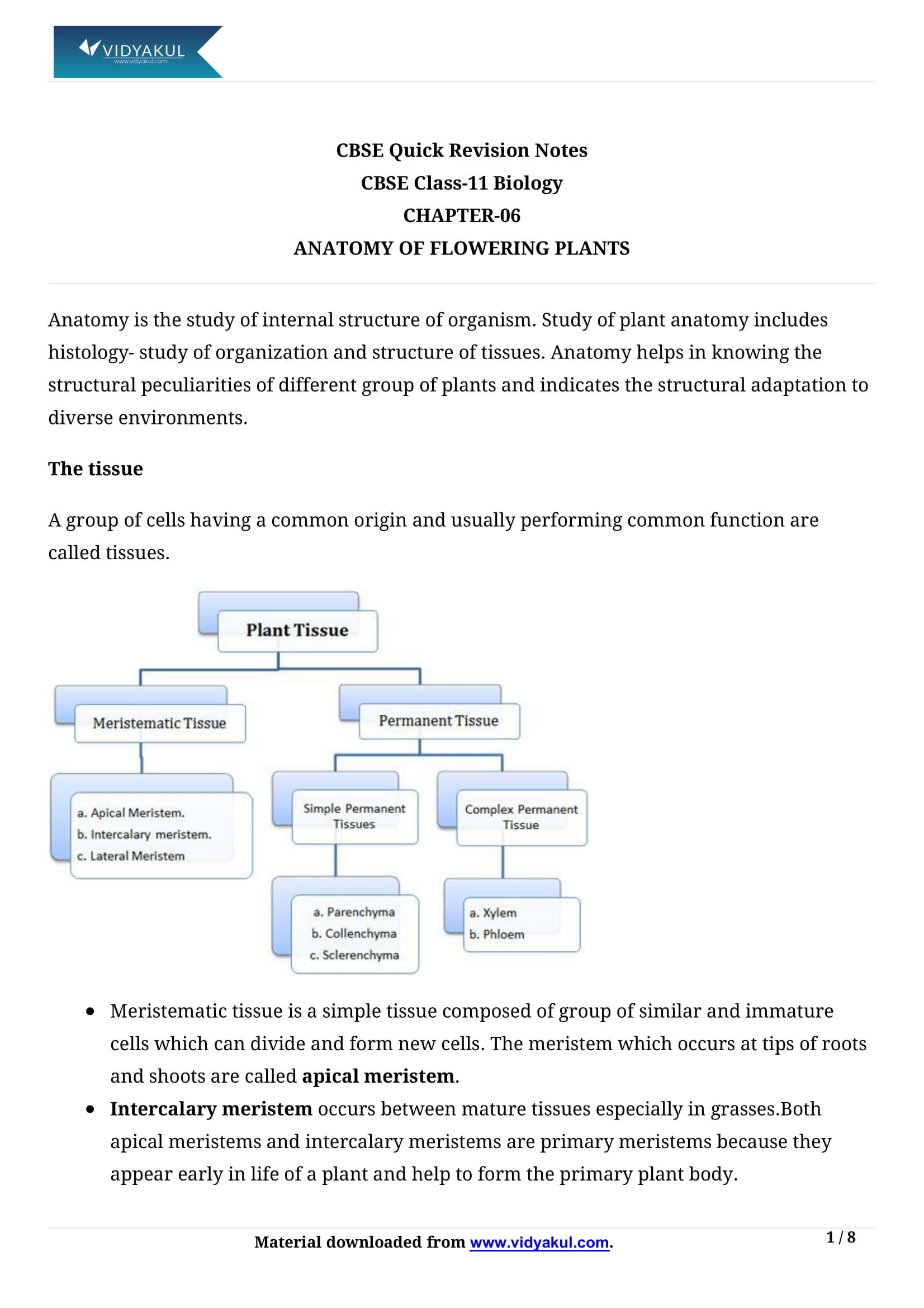 Anatomy Of Flowering Plants Class 11 Notes Vidyakul