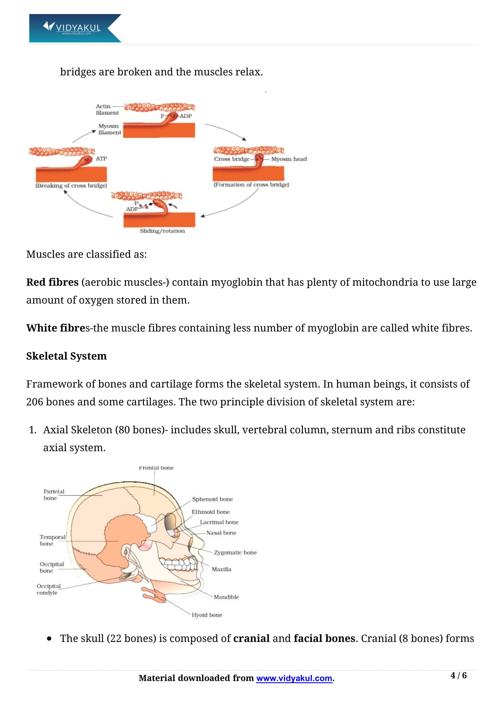 CLASSNOTES: Class 11 Biology Notes In English