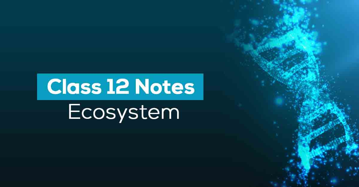 Ecosystem Class 12 Notes