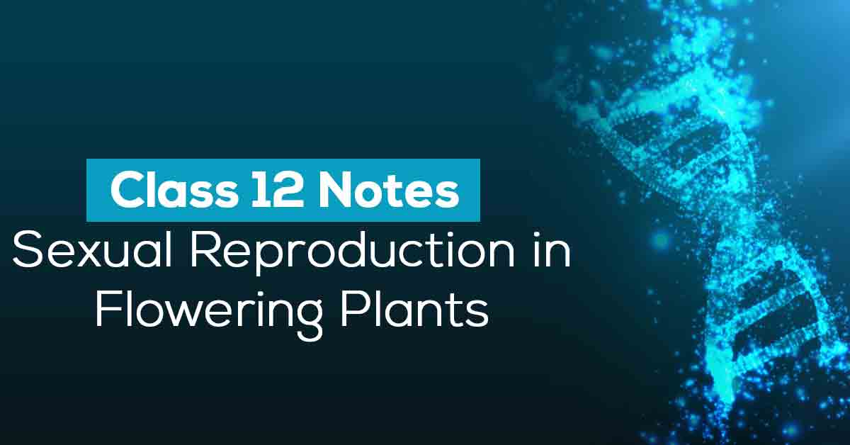 Sexual Reproduction in Flowering Plants Class 12 Notes