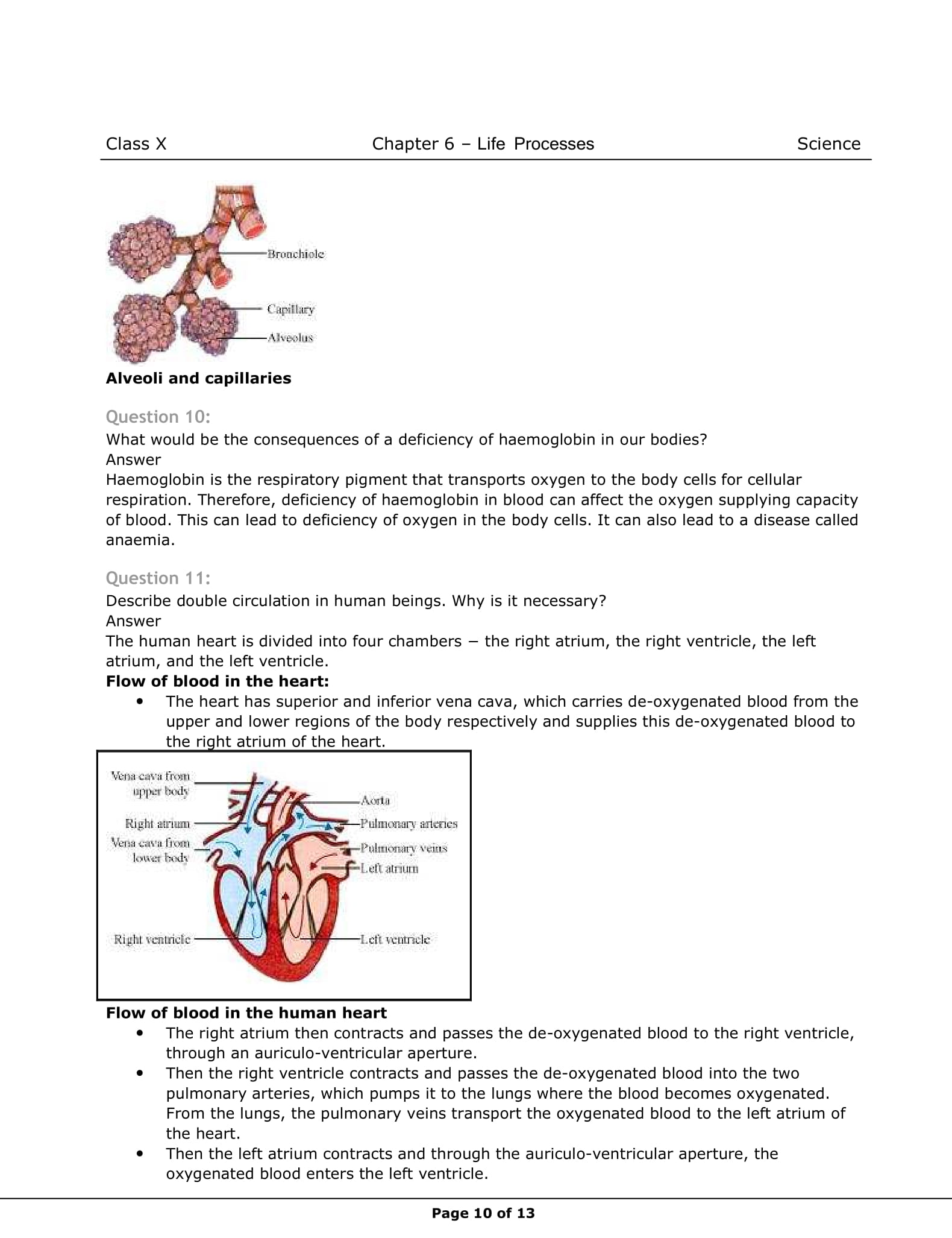NCERT Solutions for Class 10 Science Chapter 6   Vidyakul