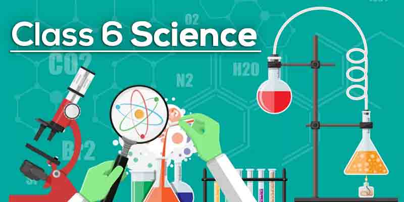 Anytimestudies Class 6 Science Animated Video Lecture in English & Hindi (DVD)